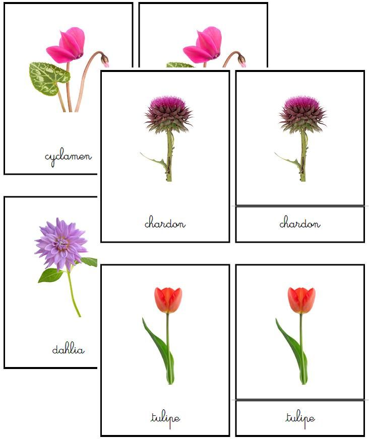 Cartes de nomenclature fleurs | Boutique ''documents Montessori''