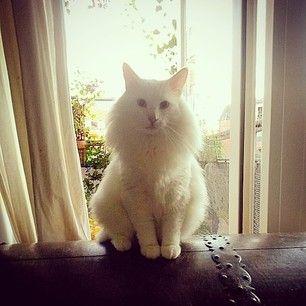 Instagram photo by sakeenaamelie - #sakeena #whitecat #snowstorm