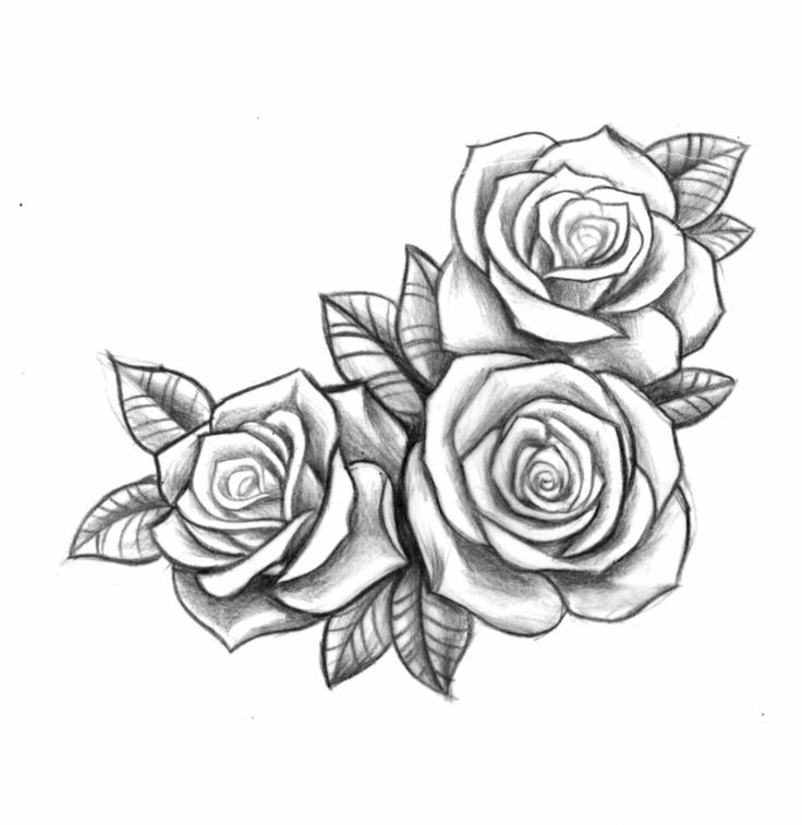 pencil drawing with three roses open one next to another in black and white, meaning pink tattoo