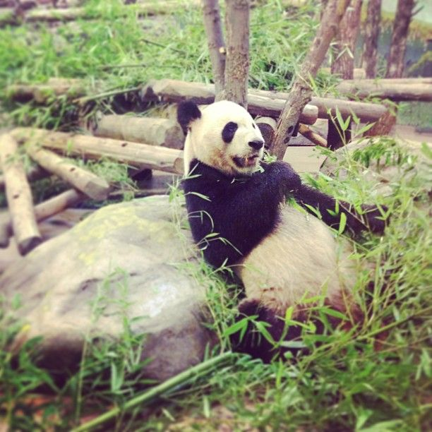 Visiting The Toronto Zoo #panda