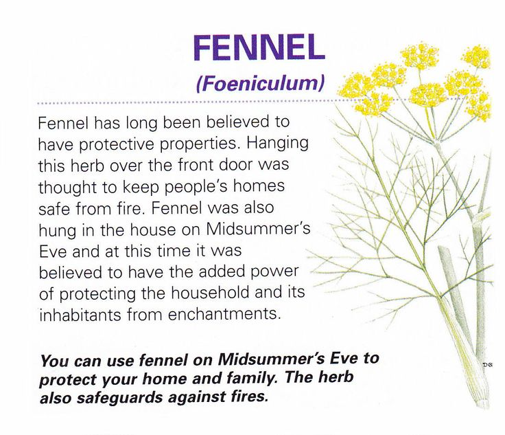 Magical herb Fennel