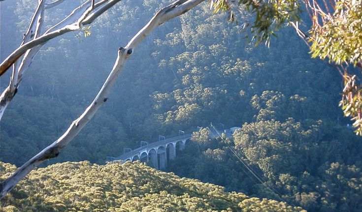 Forest walk to Sublime Point track | NSW National Parks