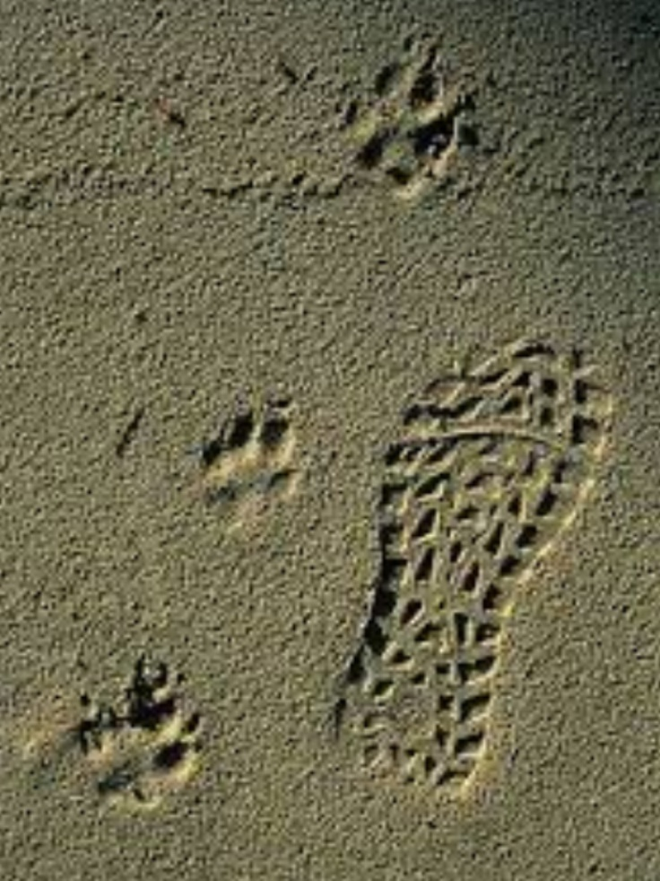 Footprints in the sand...
