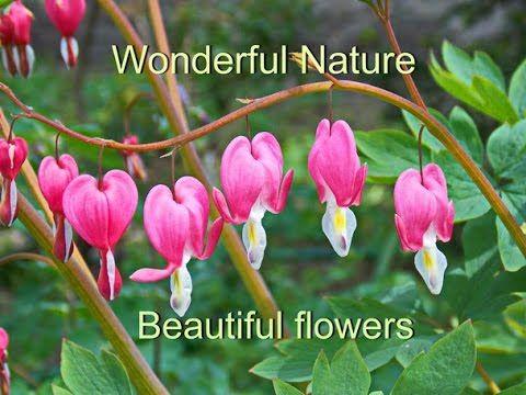 Wonderful Nature & beautiful flowers  Прекрасная природа и красивые цветы