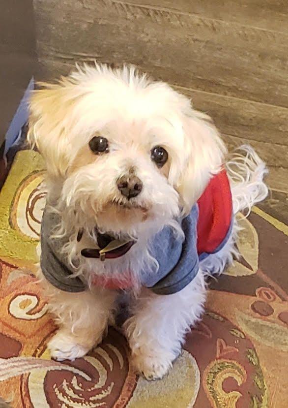 Adopt Marlon Saki On Dog Adoption Rescue Dogs Animal Photo