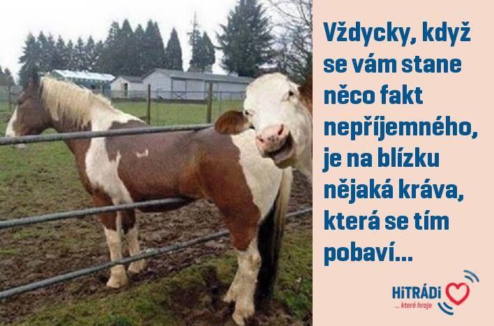 Vždycky, když se vám stane něco fakt nepříjemného, je na blízku nějká kráva, která se tím pobaví...