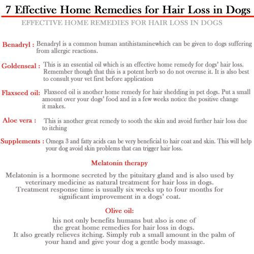 1000+ Ideas About Dog Hair Loss On Pinterest