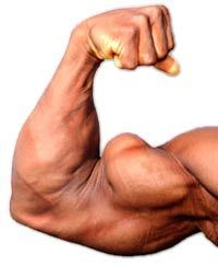 Best Compound Exercises for Biceps - Bicep Muscle Arm Workout Tips http://papasteves.com