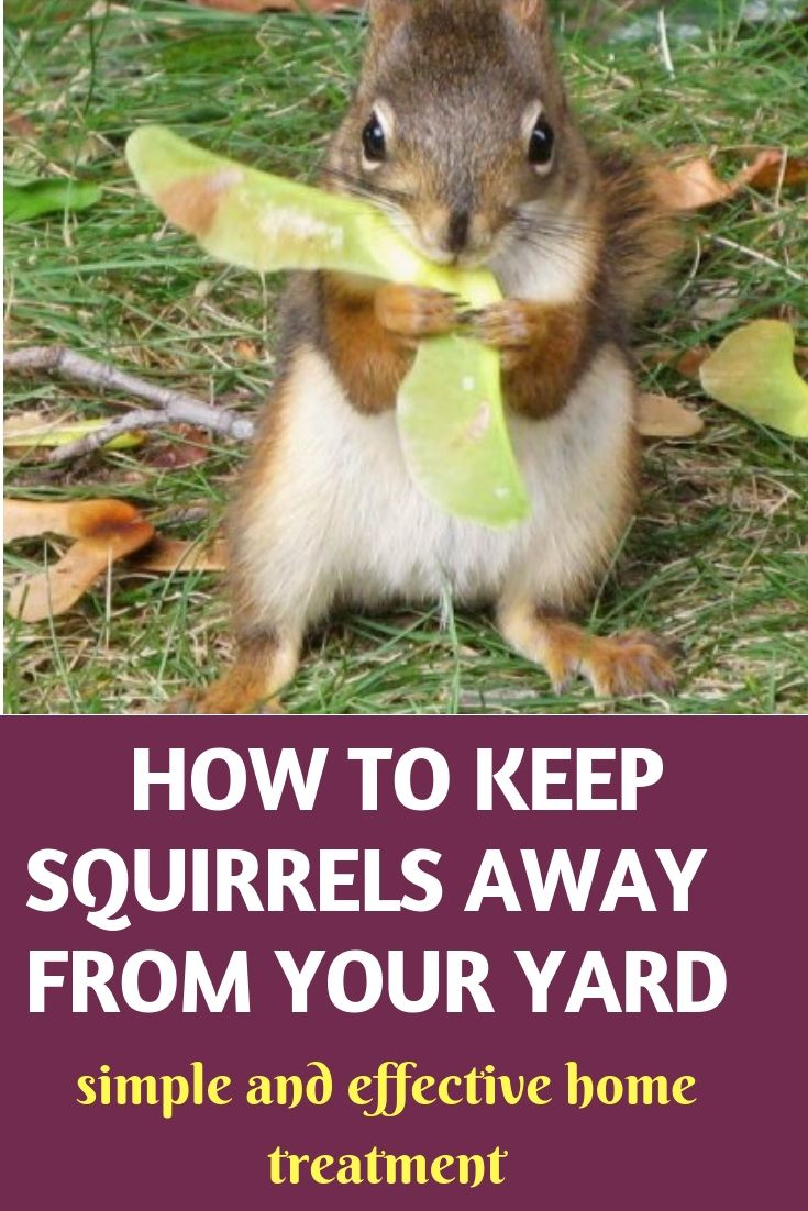 20 natural ways to keep squirrels away from your yard