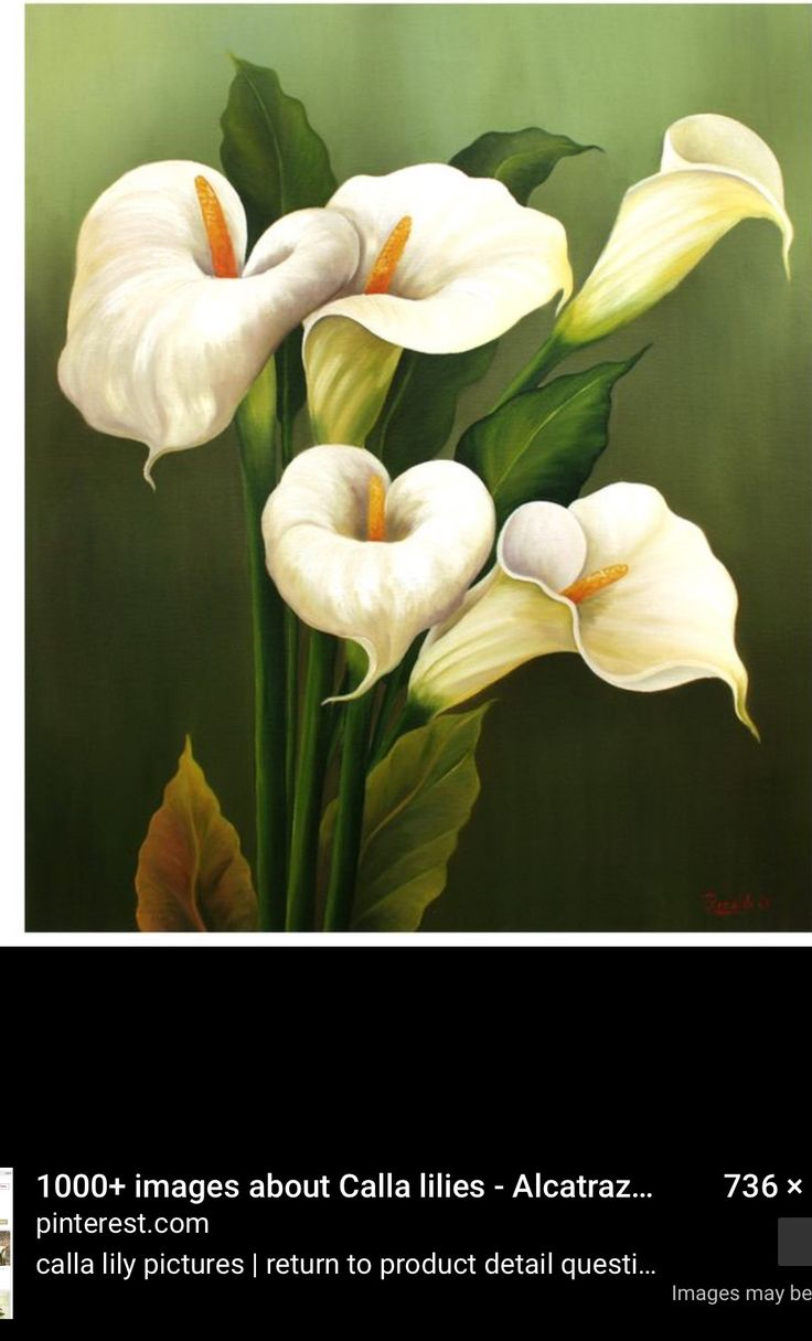 Pin By Darlene Twymon On Lillies Lily Painting Painting