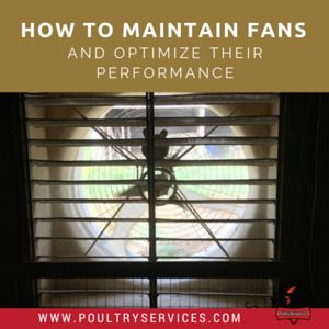 How To Maintain Fans And Optimize Their Performance For Improved Cooling And Reduced Costs - http://www.poultryservices.com/blog/how-to-maintain-fans-and-optimize-their-performance-for-improved-cooling-and-reduced-costs