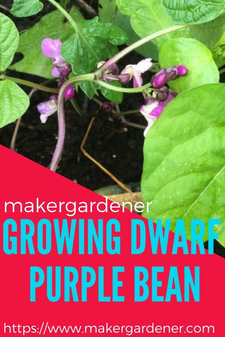 Pin On How To Grow Garden