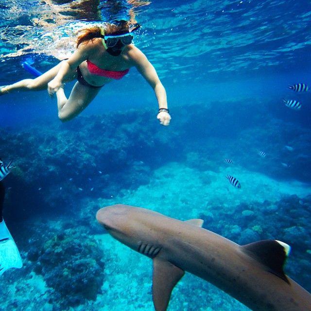 One of the #awesomeadventuresfiji #Fiji #accommodation #activity options. #Swim with #Sharks!