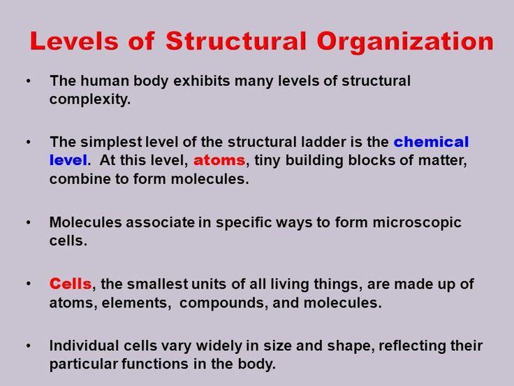 Human Body Exhibit Microscopic Cells Bodies Exhibit