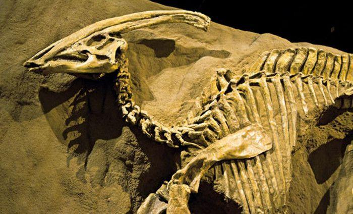 Muchos de los fósiles están relativamente intactos, lo que favorece el ensambladura de un esqueleto completo de dinosaurio.