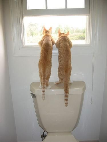 two cats looking out bathroom window