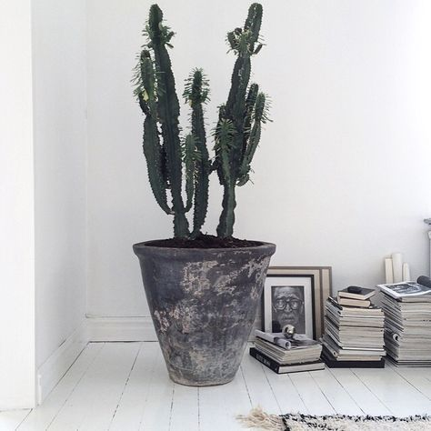 Giant plant pot with a cactus. The stunning monochrome home of Swedish stylist Jenny Hultgren / Bohemdeluxe.