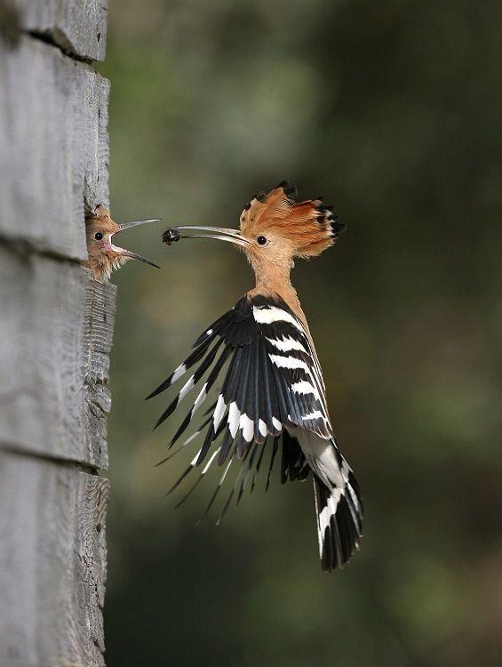 Linkbulb - Incredible Wildlife Photography | Peachy Green