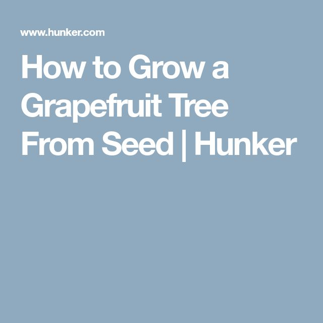 How to Grow a Grapefruit Tree From Seed | Hunker