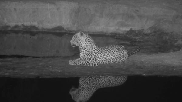 Leopard at Nkorho 2 - Oct 6 2016 - 2:50am | Africam