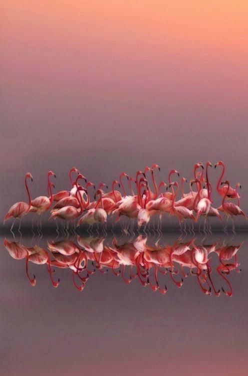 Purple sunset & a flock of flamingos
