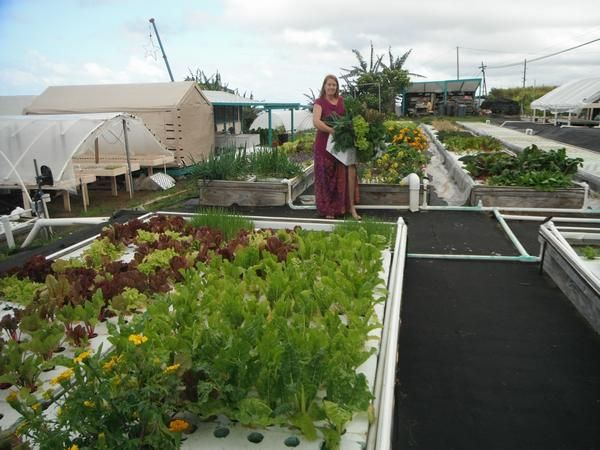 our commercial aquaponic systems packages are designed to make you profitable when you start a commercial