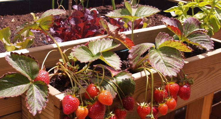Calendario siembra de semillas y hortalizas huerto urbano ecológico