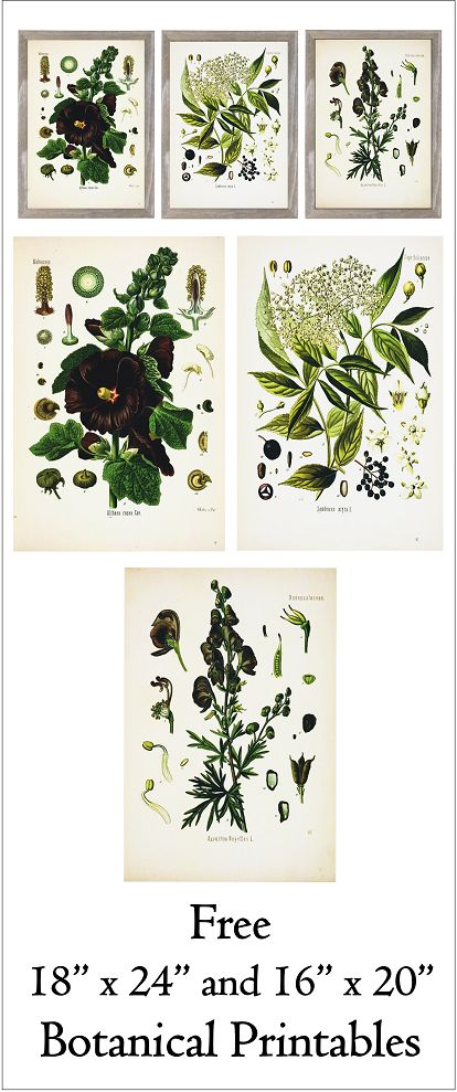 botanical prints fixer upper - Google Search