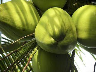 http://diariodopassageiro.blogspot.com/2015/06/manfaat-buah-kelapa-bagi-kesehatan-tubuh.html