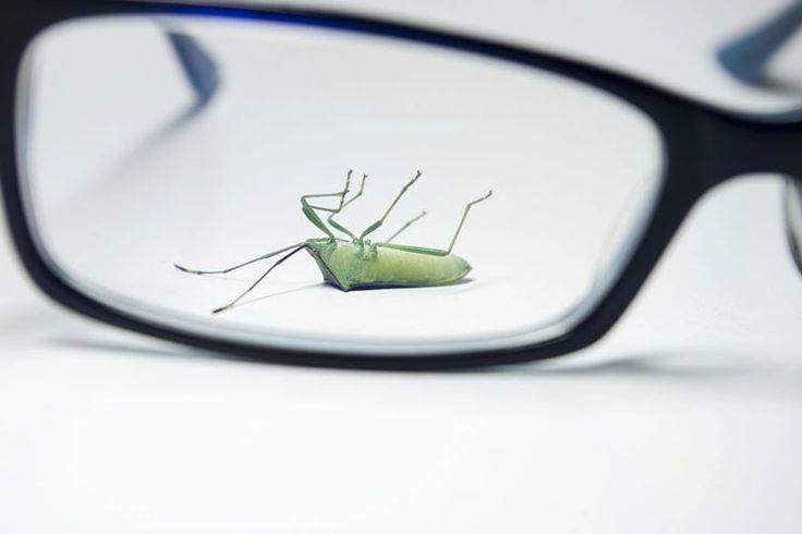 E' un male che affligge ogni casa. Gli insetti: come debellarli? http://www.arredamento.it/insetti-in-casa-come-debellarli.asp  #insetti #casa