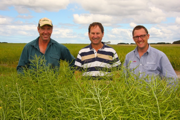 Mal Thomson, Glen Bergersen, and Bayer's David Peake out in the field. #canola #farming #agriculture