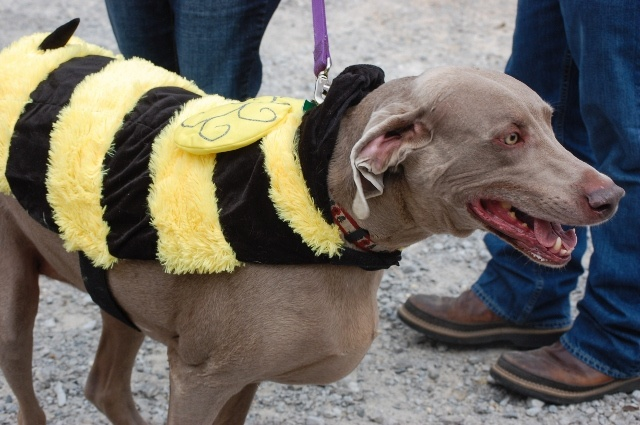 Another busy bee dog