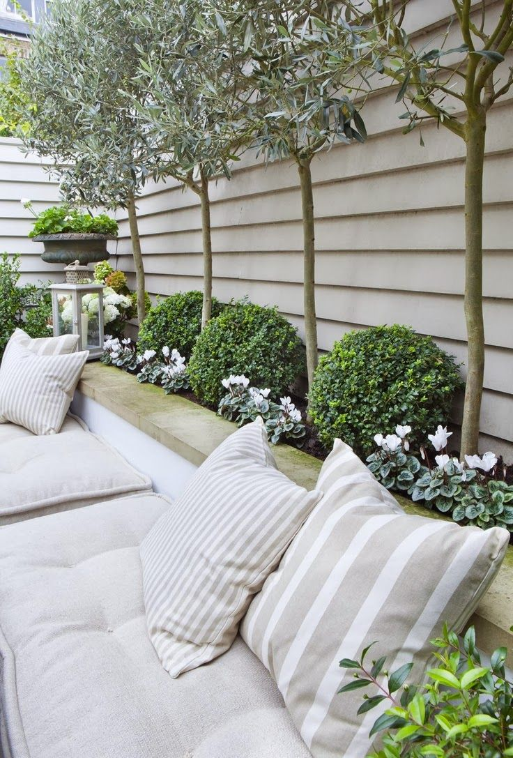 Lovely idea for the back garden - fence topiary olives and cushions