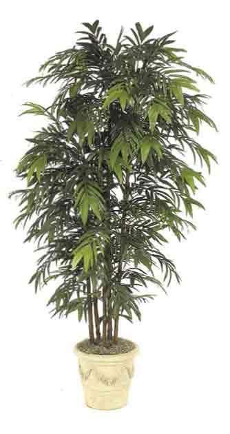Pet Safe Indoor Plants for Cleaner Air