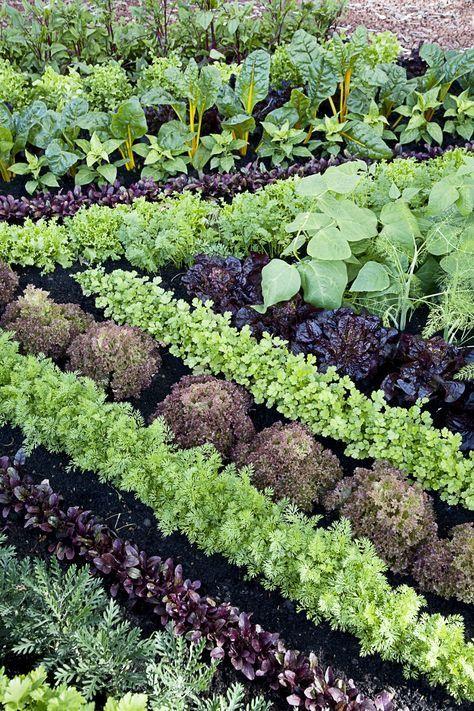 Companion planting just may help your garden grow. #OrganicGardening
