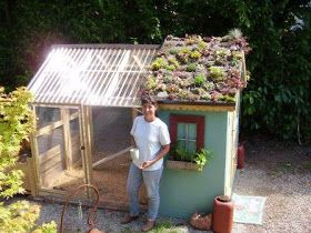 The Blue Between: Dreamin' of Chicken Coops.........LOVE the idea of clear, sun absorbing roof covering so in the winter they are a little warmer when out...and look....a succulent garden on part of the roof! SOooooooooo cool!
