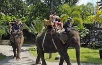 Bali Zoo Elephant Ride Tour: Bali Zoo Elephant Ride Tour Packages