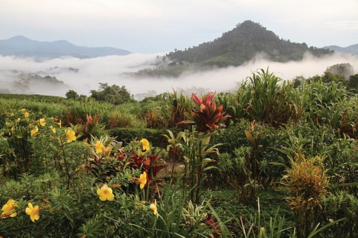 https://www.petitfute.com/medias/photo/835/d5/92/202341-parc-national-de-kinabalu-jardins-de-la-plantation.jpg