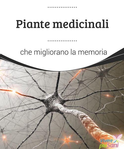 Piante medicinali che migliorano la memoria  Elenco delle piante medicinali che migliorano la memoria