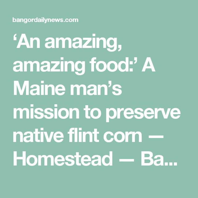 'An amazing, amazing food:' A Maine man's mission to preserve native flint corn — Homestead — Bangor Daily News — BDN Maine