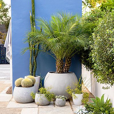 Desert Garden Ideas ravishing desert landscaping plants with pool for modern style style storage fresh at desert landscaping plants Best 25 Desert Backyard Ideas On Pinterest Desert Landscaping Backyard Desert Landscape Backyard And Low Water Landscaping