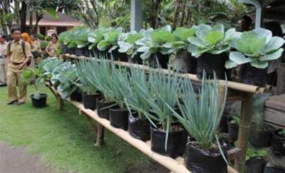 plants for house yard