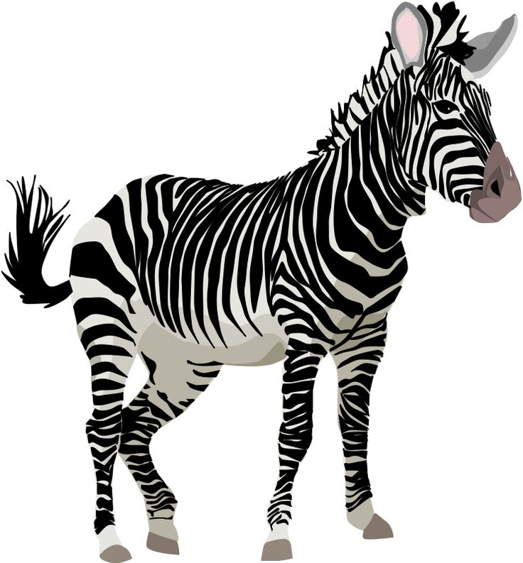 Zebra Clipart | Zoo Safari Jungle Rainforest Zebras ...