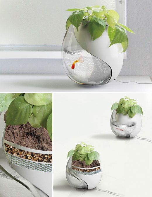 One Pot, Two Lives | a planter and a fishtank in one to promote a beautiful example of simbiotic living.  While the fish's waste provides nutrients for the plant, the plant filters the water that it is fed to provide clean water for the fish.  Genius!