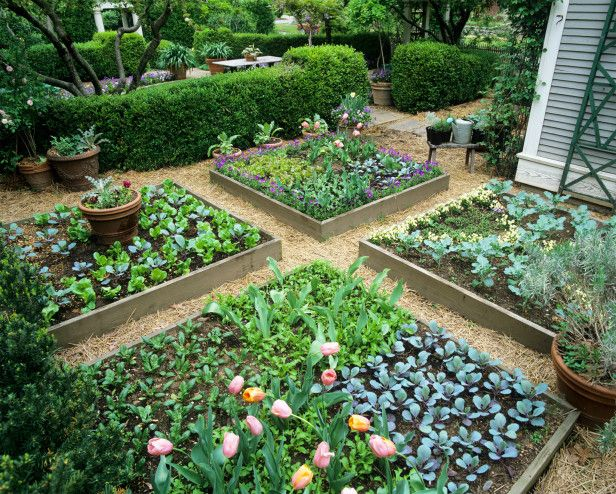 Kelly's tips for maximizing small gardening spaces: Wide rows, high-yield plants and raised beds --> http://hg.tv/pz8c