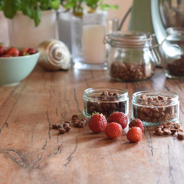 Eins der Dinge die ich in Griechenland vermisst habe, waren die frischen Erdbeerfelder auf denen man selbst pflücken kann.  Es ist Erdbeere-Zeit, also bin ich letztes Wochenende los und habe 4 KG #Erdbeeren gepflückt. Und ich hab nicht nur Marmelade für uns gemacht, sondern auch verschiedenen Leckereien für Lilly.  Im Blog findest Du jetzt das erste #Rezept für 2 Sorten Mini-Trainings-Leckerli mit Leinsamenmehl & Buchweizenmehl: #linkinbio