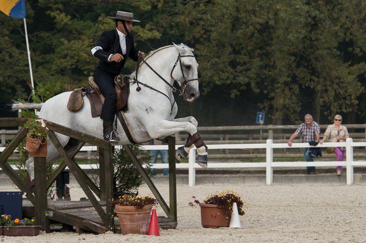 Working Equitation copyright Laurent Vilbert