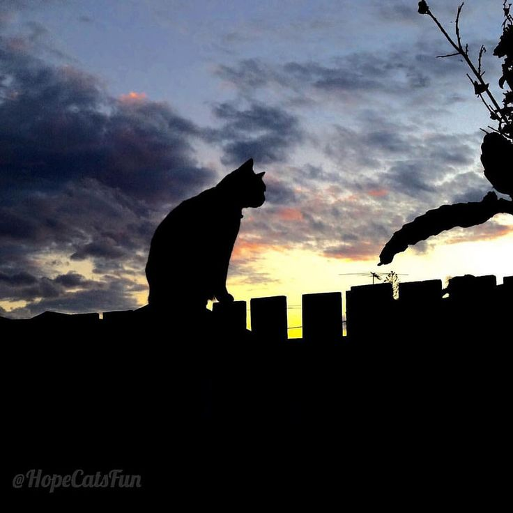 https://flic.kr/p/NRyqJZ | Autumn the Ginger Ninja Cat on the fence at sunset | See videos of Autumn the Ginger Ninja on Hope Cats YouTube www.youtube.com/channel/UCnmHFzKCIVEfd-LXl87QELQ