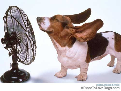 i'm a big fan of basset hounds http://www.aplacetolovedogs.com
