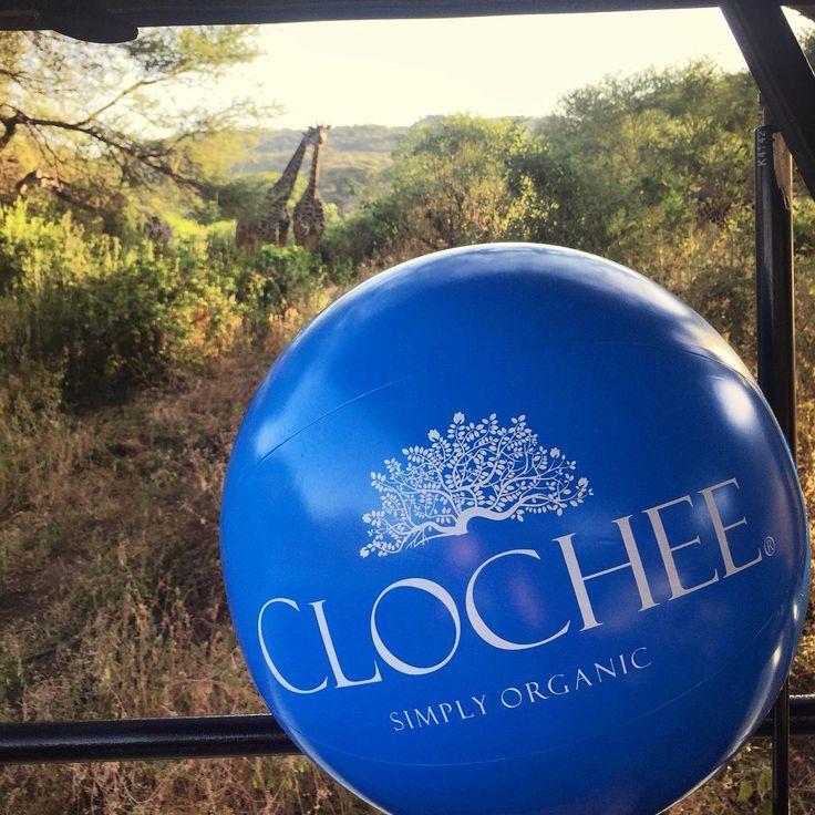 Z piłką wsród zwierząt ☺️Clochee❤️Tanzanię!!! #clochee #tanzania #żyrafa #safari #instatraveling